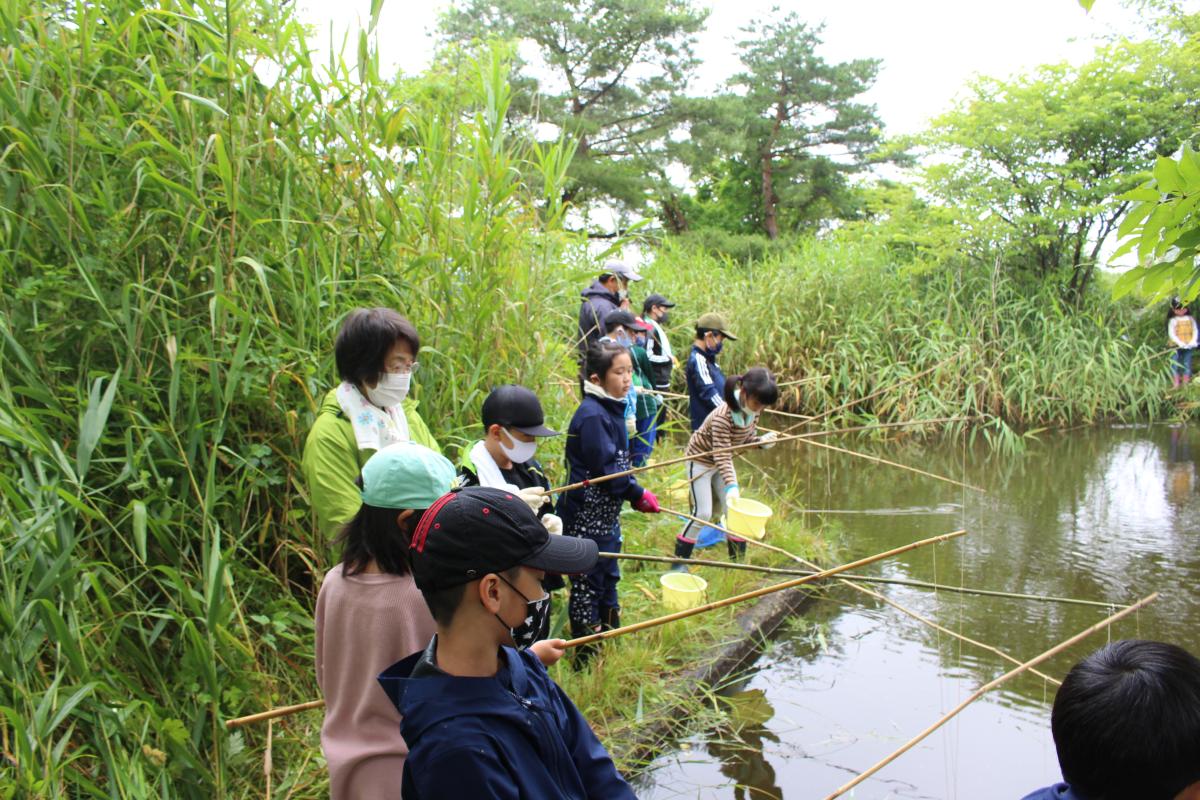 ザリガニ釣りをする学童の様子