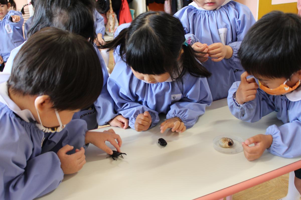 カブト虫の成虫を観察する3才児