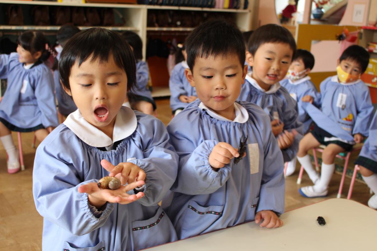 カブト虫の幼虫に触れる3才児