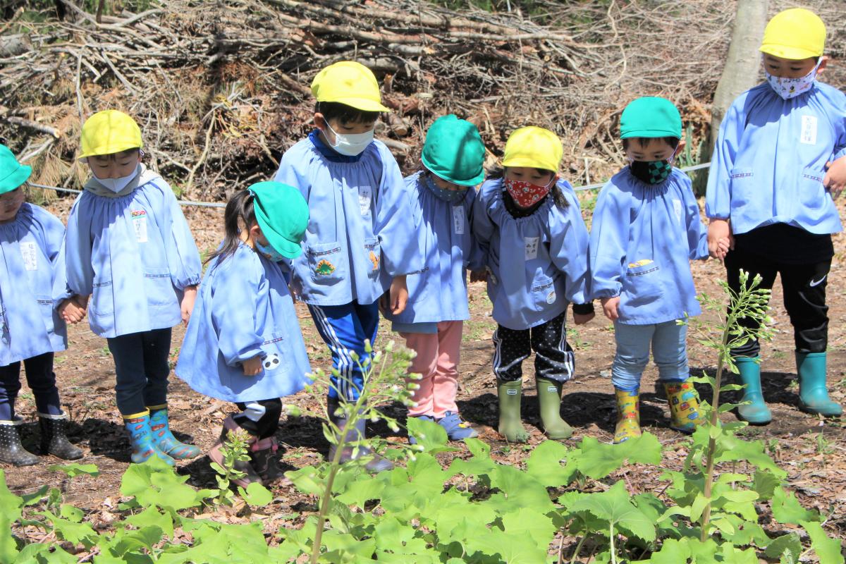 森で寄り道する3才児と5才児の様子