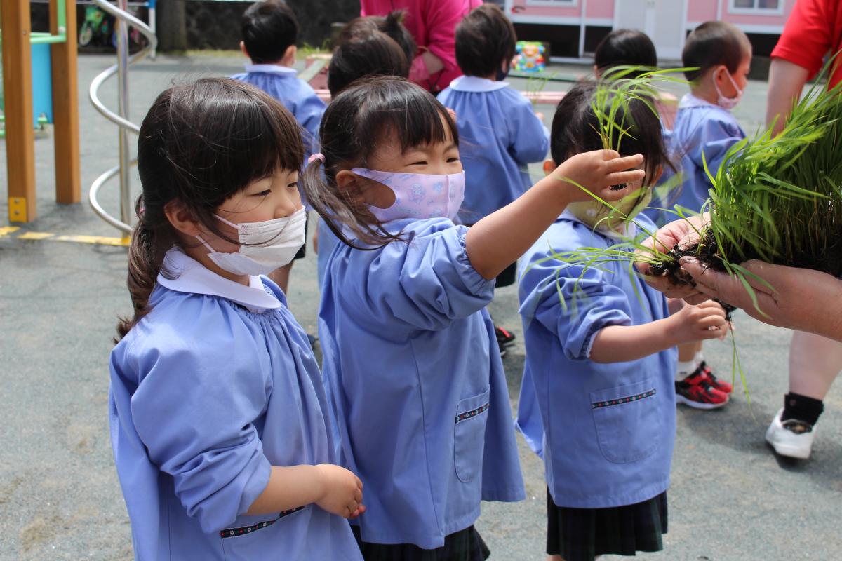 初めてお米の苗を手にする3才児
