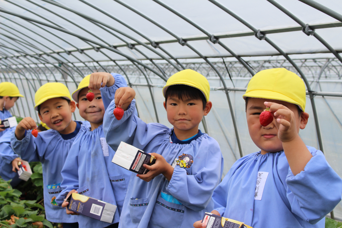 採ったイチゴを見せる嬉しそうな5才児の様子