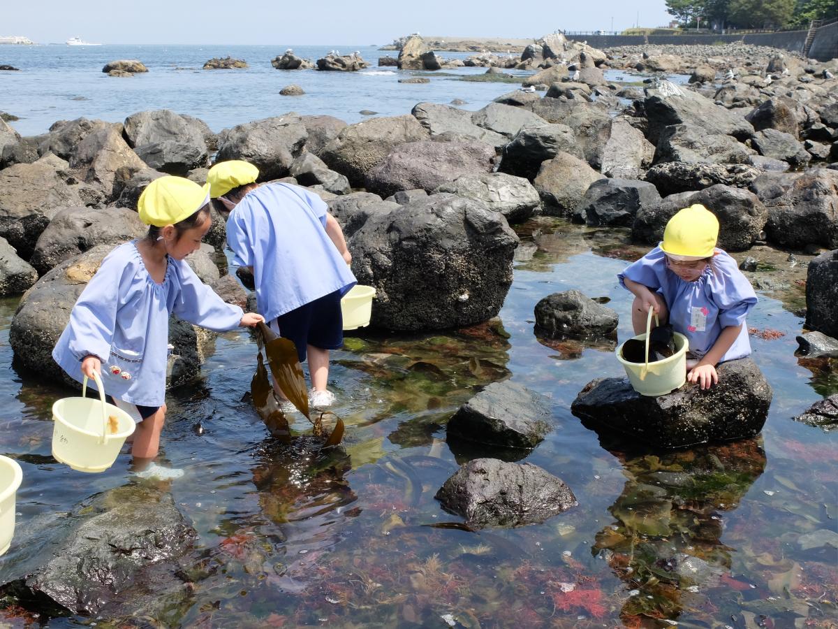 岩陰のカニを探す5才児の様子
