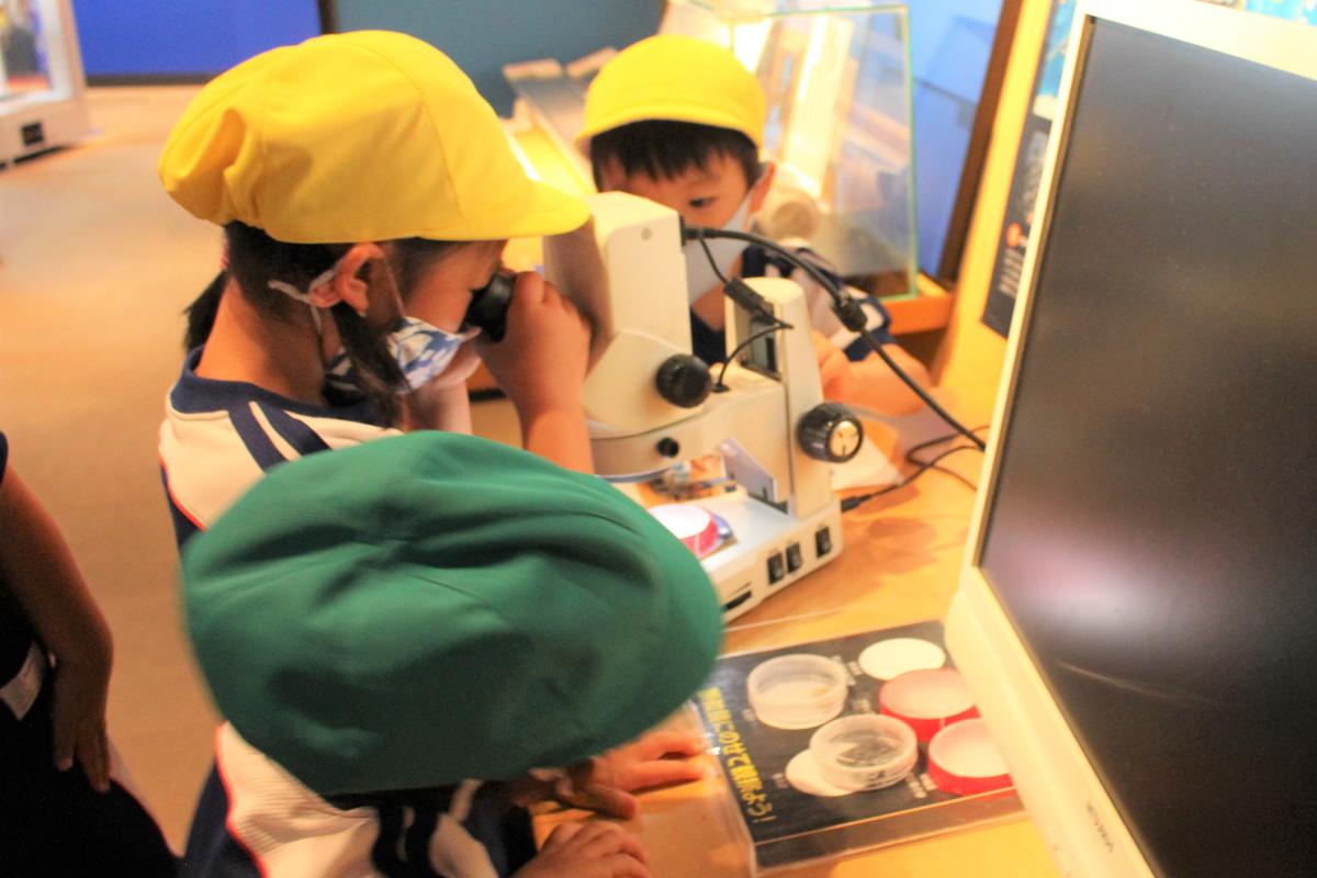 顕微鏡を覗き込む5才児の様子