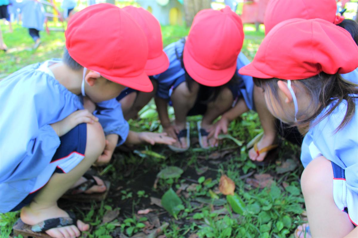 見つけた虫を観察する4才児