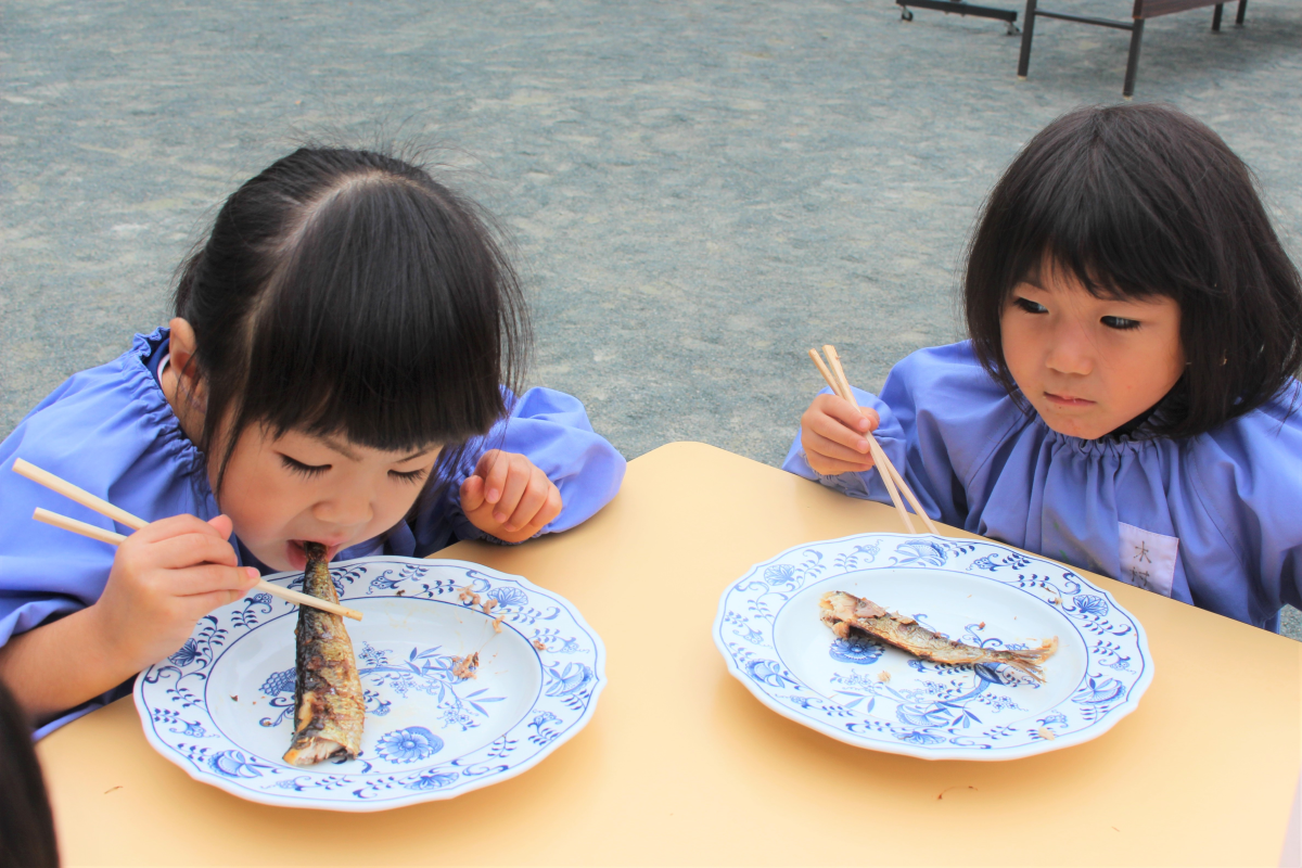 焼きたてのイワシを食べる3才児の様子