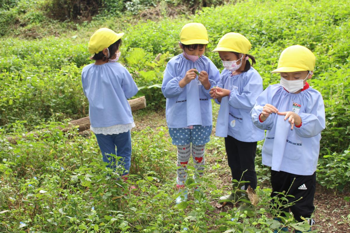 花のつゆを爪に塗って遊ぶ5才児の様子