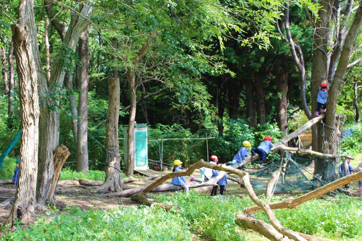 木登りして遊ぶ園児の様子